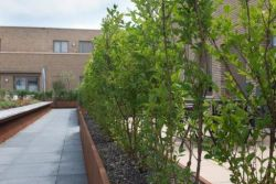 Corten retaining walls -